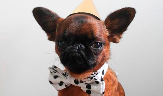 http://govpsfx.com/wp-content/uploads/2016/12/450-rub-aktsiya-dog2.jpg